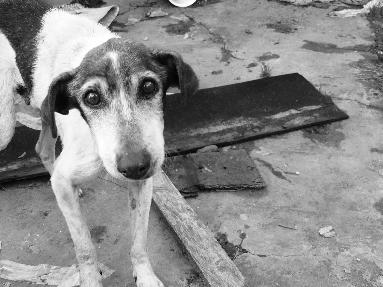 dog, sad, stray dog