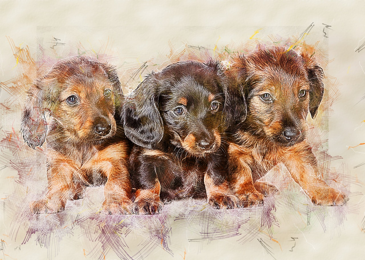 dachshund, dog, cute