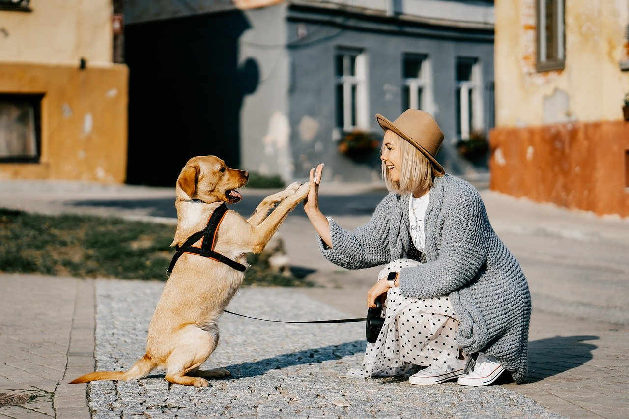 girl, dog, pet