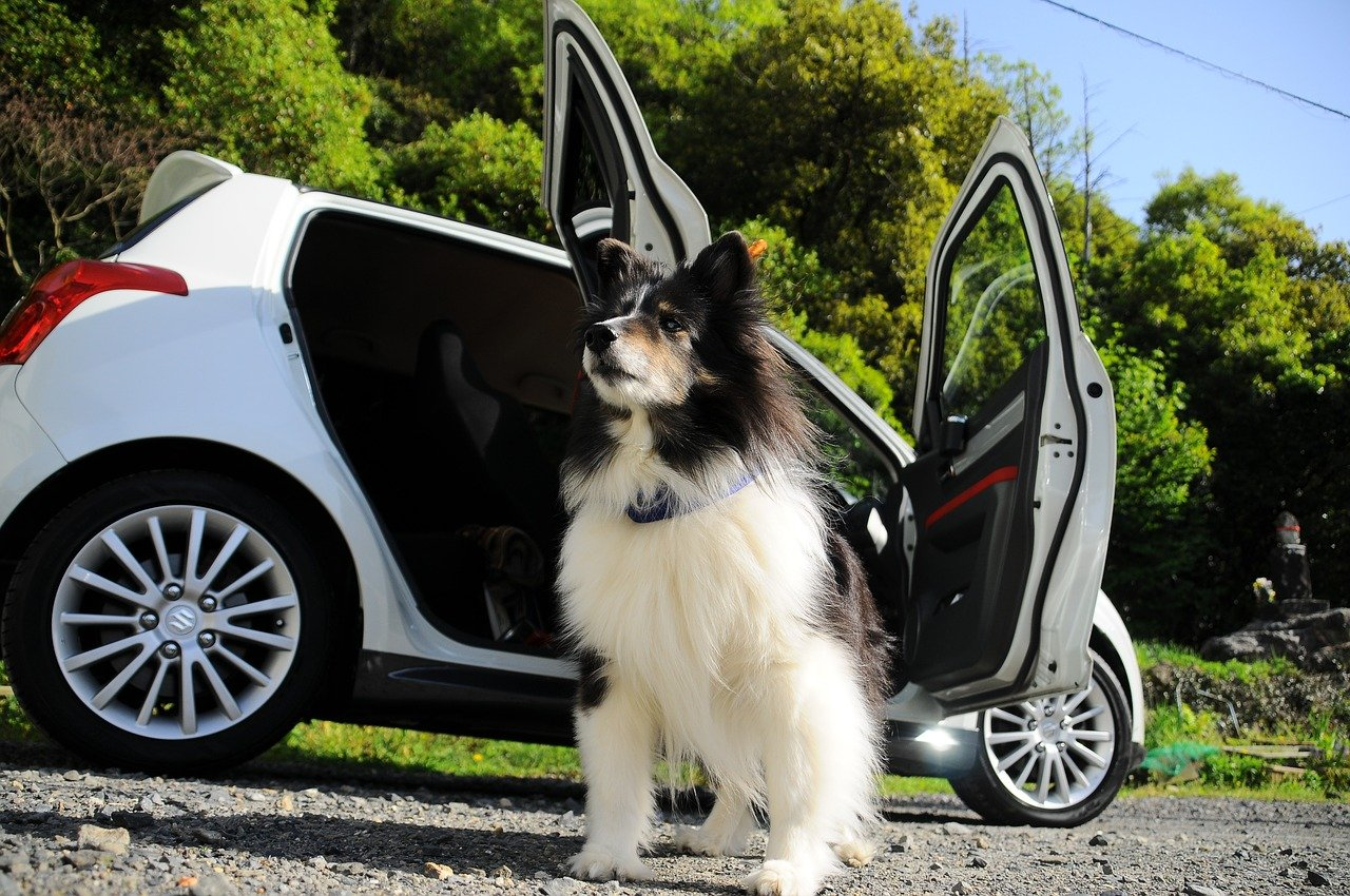 dog, car, the magnificent